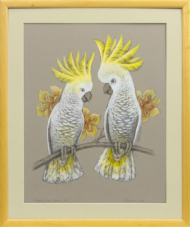 Papagaiļu pāris. Kakadū
