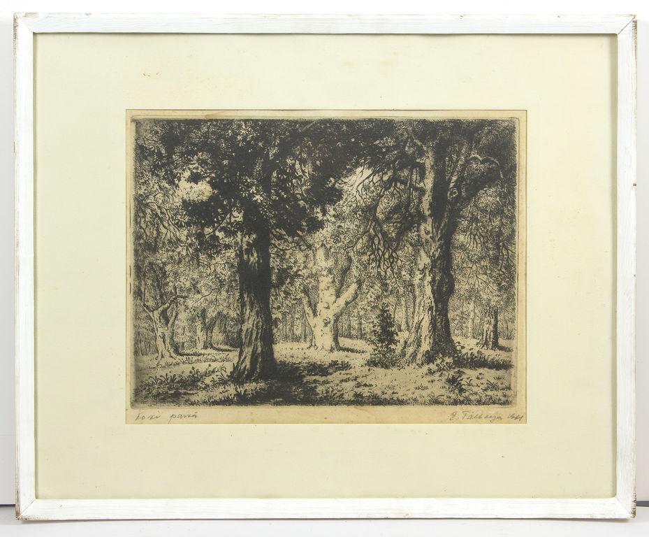 Koki parkā