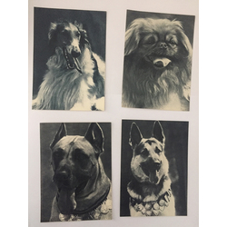 Suņu fotogrāfijas (15 gab.)